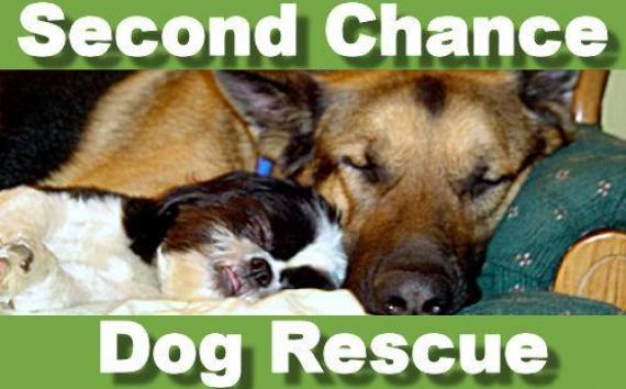 Second Chance San Diego Dog Rescue
