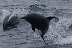 A Whale Watching Adventure with Pacific Nature Tours