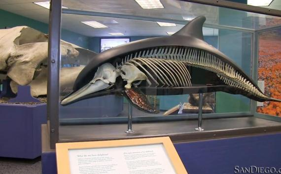 Learn About The San Diego Natural History Museum Sandiego Com