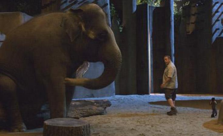 """Kevin James as Griffin Keyes in """"Zookeeper."""""""