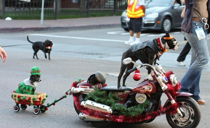 Gaslamp Holiday Pet Parade at Hilton Park