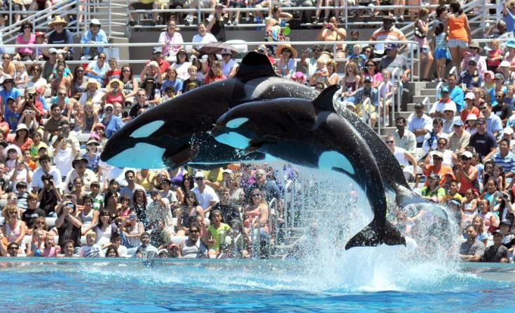 Seaworld San Diego Tickets Hours Directions Guide Sandiego Com