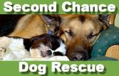 San Diego Animal Shelter Guide