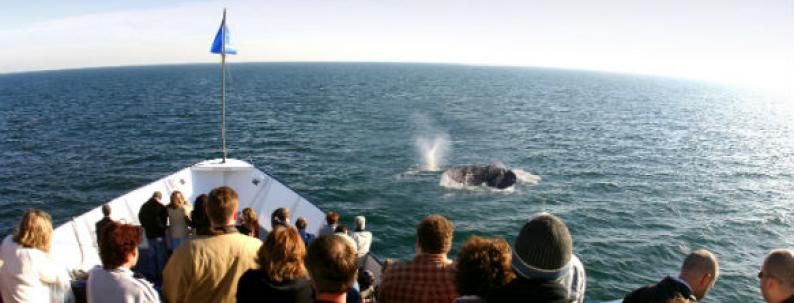 Hornblower Cruises Whale Watching