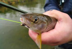 Free Fly Fishing Lessons