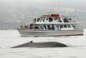 Newport Landing Whale Watching Tours