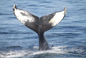 San Diego Whale Watching Expedition Cruise